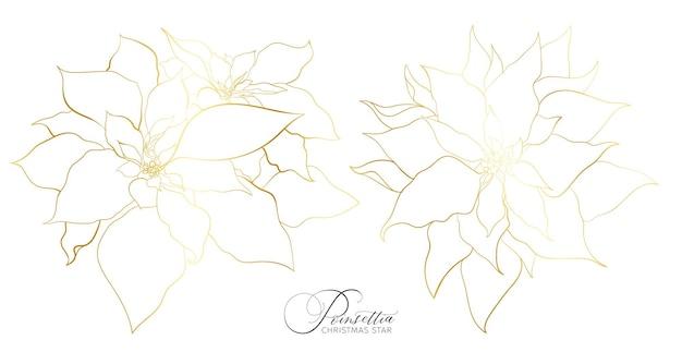 エレガントな金色のラインのポインセチア花序