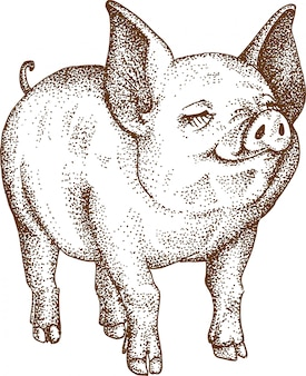 Pointillism drawing of pig