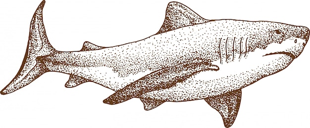 Pointillism drawing of shark