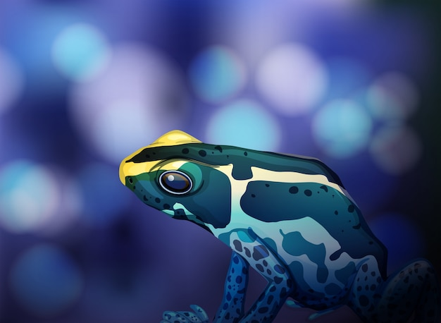 Poison dart frog on blue background