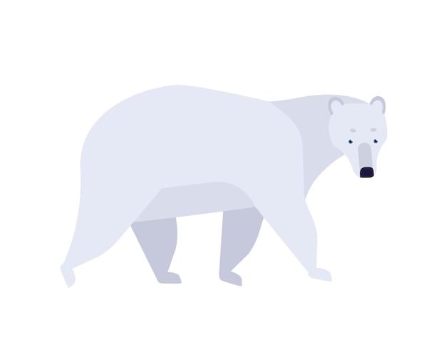 Polar bear flat vector illustration. ursus maritimus minimalist drawing. abstract arctic fauna representative. cute mammal with white fur clipart. big endangered carnivorous species.