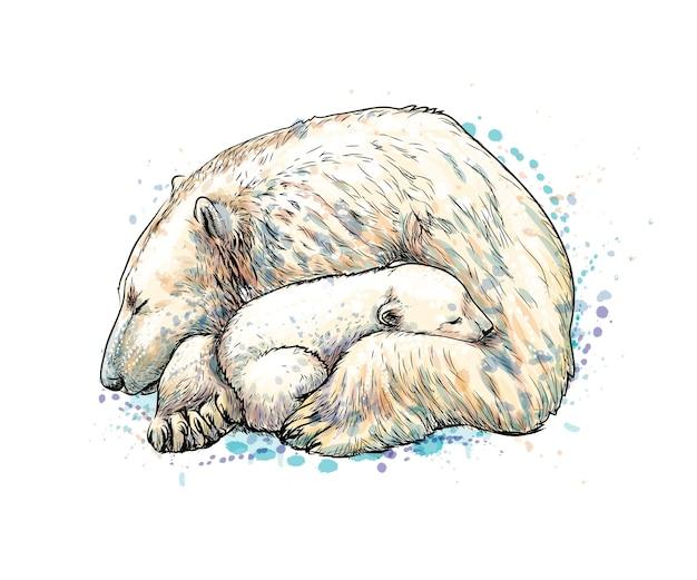 Белый медведь с детенышем от всплеска акварели, рисованный эскиз. иллюстрация красок