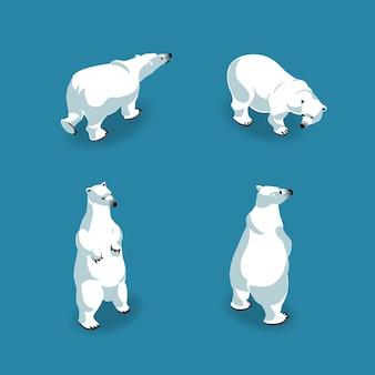 등거리 변환에서 4 포즈의 북극곰. 삽화