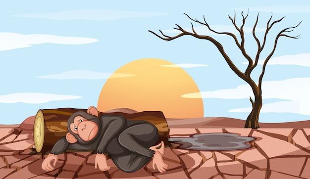 원숭이와 가뭄으로 오염 제어 장면