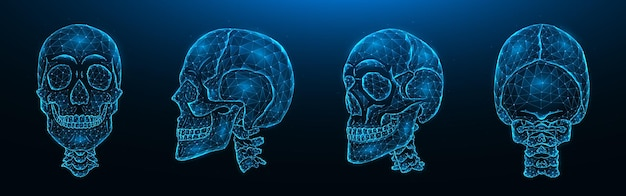 Polygonal vector illustration of human skulls, front, side, and back views. set of low poly models of skulls with cervical spine isolated