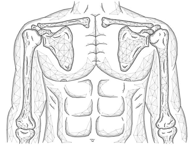 어깨와 팔꿈치 관절의 다각형 벡터 그림, 선과 점으로 만든 인체 모델, 전면 보기.