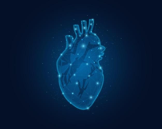 Polygonal wireframe illustration of human heart