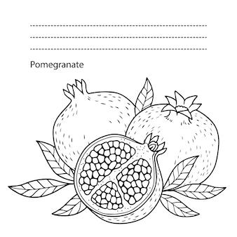 Pomegranate colorful illustration
