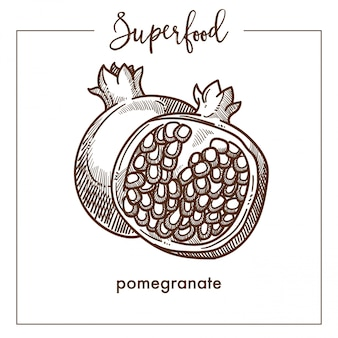Pomegranate cut in half monochrome superfood sepia sketch