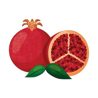 석류 열매 벡터