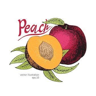Pomegranate fruit with leaves retro design template. botanical fruit. engraved pomegranate. vector illustration
