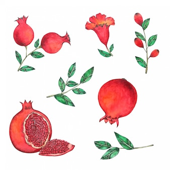 Pomegranate hand painted in watercolor collection