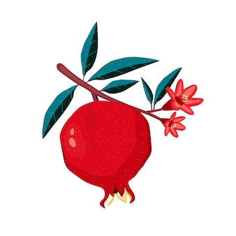 Pomegranate tree branch. fruit in illustration flat style