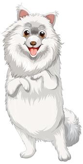 Fumetto del cane di pomerania su sfondo bianco