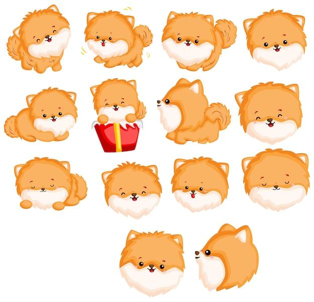 Pomeranian image set