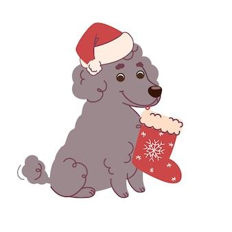 クリスマスの靴下とサンタの帽子とプードル犬