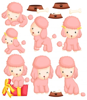 Poodle image set