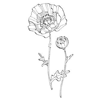 ポピーの花。花の植物の花。