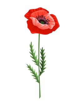 Poppy flower. watercolor hand drawn poppy. isolated botanical symbol of blooming red poppy blossom. floral design for decor or holiday wedding greeting card template.