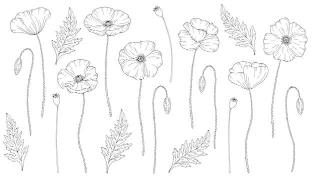 ポピーの花。