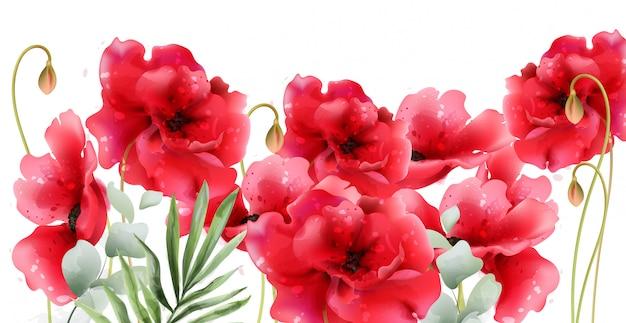 Цветы мака акварель