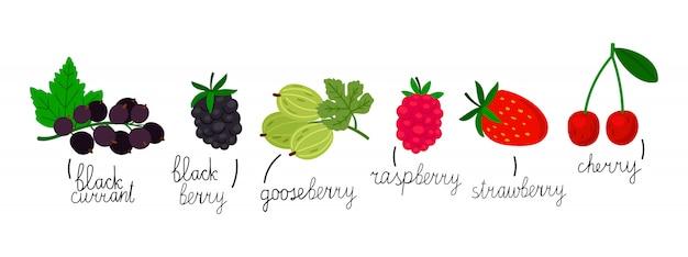 白い背景に分離された人気のある果実。手描き果実イラスト
