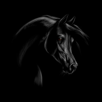 Portrait of an arabian horse head on a black background.  illustration