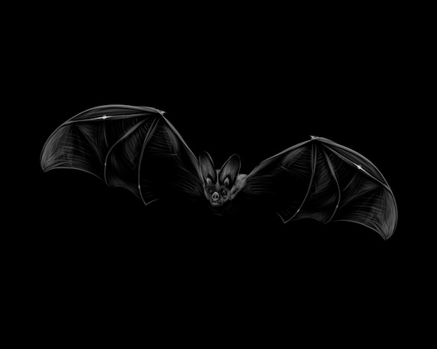 Portrait of a bat in flight on a black background. halloween.  illustration