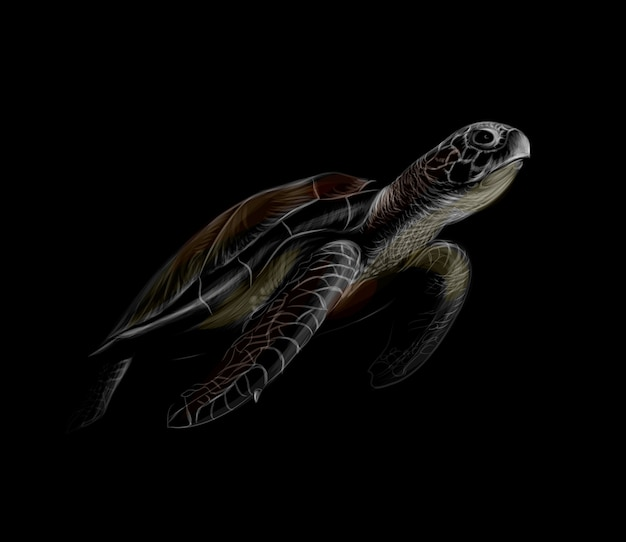 Portrait of a big sea turtle on a black background.  illustration