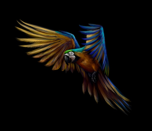 Portrait blue-and-yellow macaw in flight on a black background. ara parrot, tropical parrot.  illustration