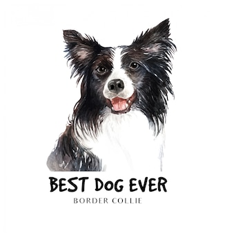 Portrait border collie for printing