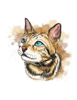 Portrait of a cat hand drawn sketch with splash of watercolors cat illustration