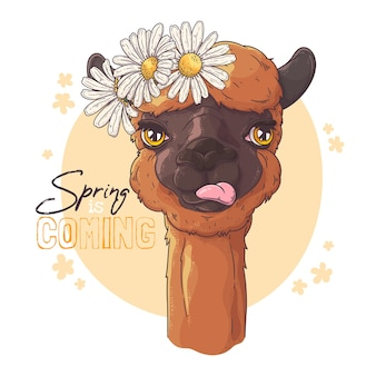 Portrait of cute alpaca with flowers