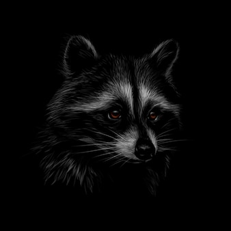 Portrait of a cute raccoon on a black background.  illustration