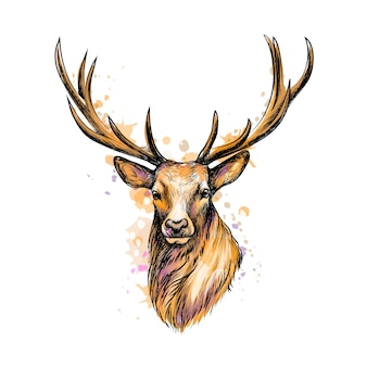 Portrait of a deer head from a splash of watercolor, hand drawn sketch.  illustration of paints