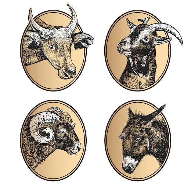Portrait of farm animals cow, ram, goat, and donkey.
