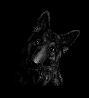 Portrait of a german shepherd dog on a black background. vector illustration