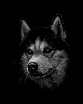 Portrait of the head of the siberian husky with blue eyes on a black background. vector illustration