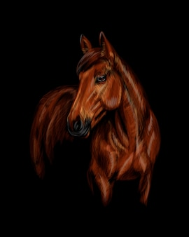 Portrait of the horse on the black background.  illustration of paints