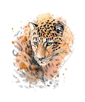 Portrait of a leopard from a splash of watercolor, hand drawn sketch.  illustration of paints