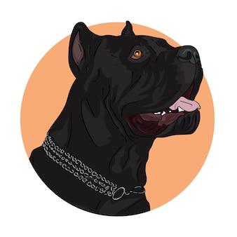 Портрет большой черной собаки кане-корсо.