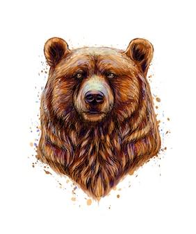 水彩、手描きのスケッチのスプラッシュからヒグマの頭の肖像画。塗料のイラスト