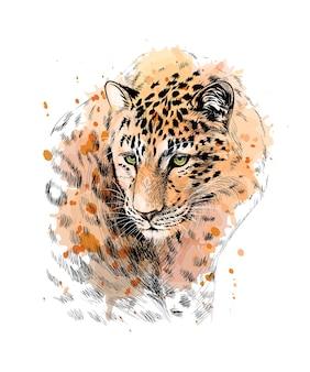 수채화의 스플래시에서 표범의 초상화, 손으로 그린 스케치. 그림 물감