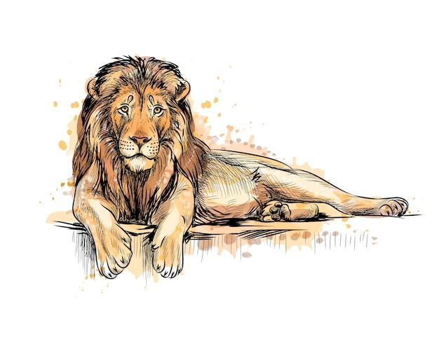 Портрет льва из всплеска акварели, рисованный эскиз. иллюстрация красок