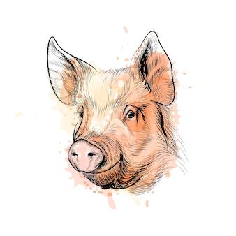 水彩のスプラッシュから豚の頭の肖像画、中国の干支豚の年、手描きのスケッチ。塗料のイラスト