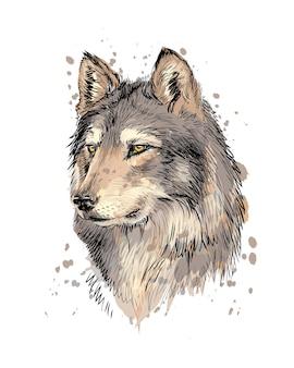 Портрет головы волка из всплеск акварели, рисованный эскиз. иллюстрация красок