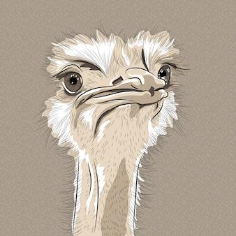 Портрет смешной иллюстрации страуса