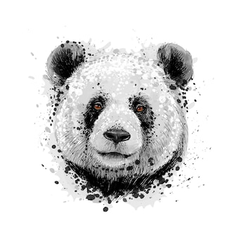 Portrait of a panda bear from a splash of watercolor, hand drawn sketch. vector illustration of paints