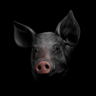 Portrait of a pig head on a black background. chinese zodiac sign year of pig.  illustration