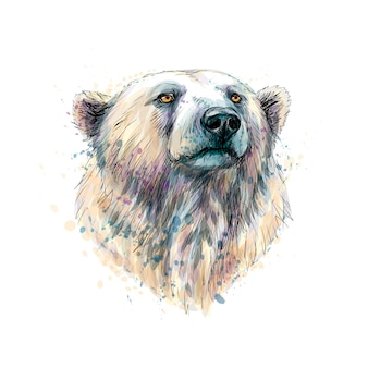 Portrait of a polar bear head from a splash of watercolor, hand drawn sketch.  illustration of paints